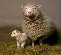 Mama and Baby Lamb